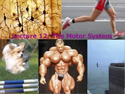 2_10F Lecture_12_Motor_Systems