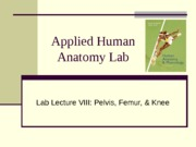 Anatomy Lab Lecture 8
