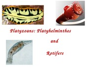 Lecture 19 - Platyhelminthes and Rotifers