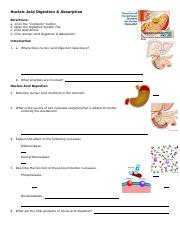 anim_nucleic_acid_digestion_absorption_worksheet.doc