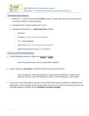 Worksheet 3 Muscle Structure