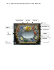 02 Plant cell