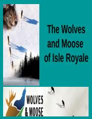 the_wolves_and_moose_of_isle_royale