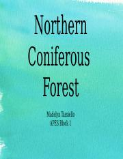 APES norther coniferous forest.pptx