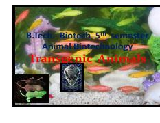 12.Lecture -Transgenic animals-.pdf