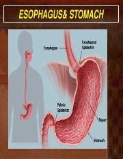 Lecture 1- Esophagus and stomach bme 15.pdf