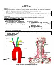 2-Blood Vessels 2.pdf