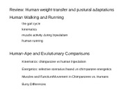 Bipedalism, lower limb anatomy and evolutionary comparisons - 2012 - post