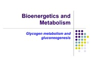 4.Glycogen Gluconeogenesis Regulation
