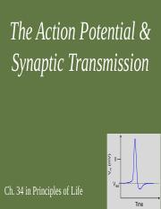 2 Action Potentials and Synaptic Transmission(1)