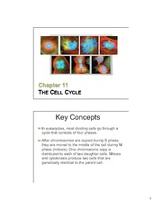 11 TheCellCycle slides