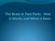 The+Brain+in+Two+Parts+_1_outline