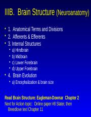 6 Brain Anatomy 230