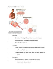 Study Guide for Connective Tissues