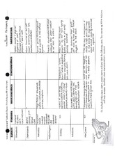 Drug Effects Worksheet