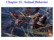 Chapter 25-Animal Behavior