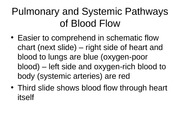 Circulatory Pathways Lecture Slides
