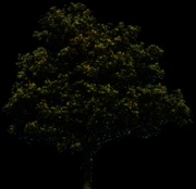 tree_34_png_by_gd08-d30unt3