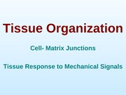 Lecture 6 TE Spring 2014 - Tissue organization - Mechanotransduction