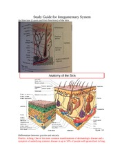 ATR385 Study Guide for Integumentary System