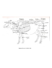 ANSC 307 - Cow Anatomy Lab