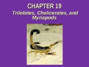 Chapter 19 Trilobites, Chelicerates, Myriapods 2013 (1)