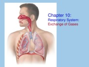 CH 10: The Respiratory System