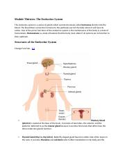 Module Thirteen The Endocrine System.docx