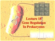 Lecture_18_Gene_regulatio_prokaryotes