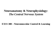 3_The_Central_Nervous_System