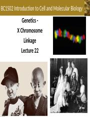Lecture+22+-+X+Chromosome+and+Linkage