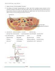 Anat review #5 Urinary system_Answers.pdf