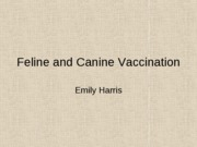 Cat_and_dog_vaccinations_for_angel_-_emi