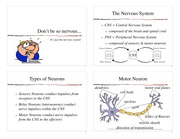Neurons Slides