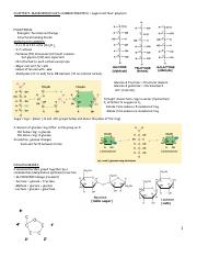 Carbohydrates Notes.pdf