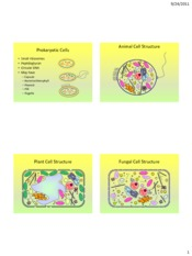 Cells ppt