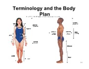 L2 Terminology and the Body plan with clicker
