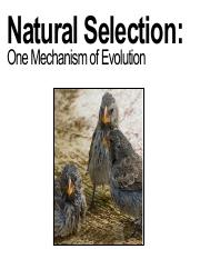 Spring 2020 Natural Selection Canvas.pdf