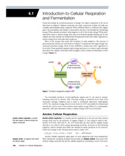 4.1 Intro To Cellular Respiration and Fermentation