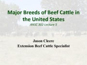Lecture 5 Breeds of cattle