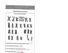 Karyotyping Answer Key Eamoeba Sisters E Videorecap Sex L Nked
