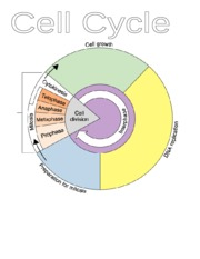 Cell Cycle Graphic