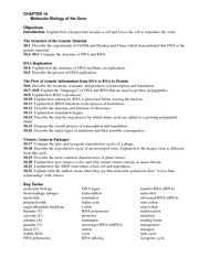 13.2_Ribosomes_and_Protein_Synthesis - Name Class Date 13 ...
