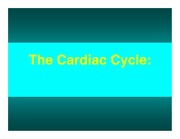 Cardiac Cycle (1 per page color)