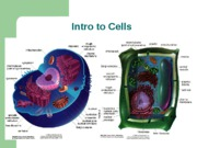 Introduction_to_Cells