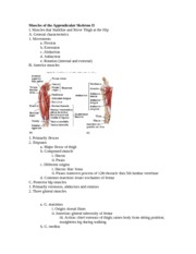 Muscles of the Appendicular Skeleton II
