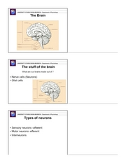 Psych 202 Brain & Behavior Slides