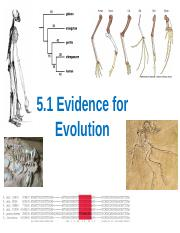 5.1 Evidence for Evolution