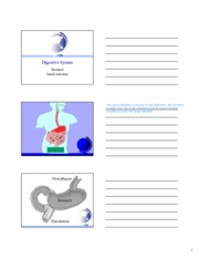 Lecture 16- Digestive System.pdf