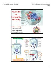 CH 1 - Cell Injury IV reversible vs irreversible [Compatibility Mode] (1).pdf